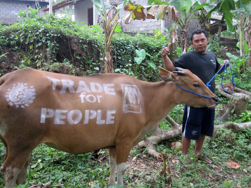 Cow Advocacy